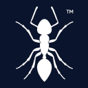 11Ants Analytics logo