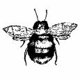 Abejas Boutique Logo
