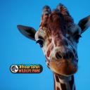 African Safari Wildlife Park logo icon
