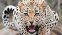 African Spice Safaris logo