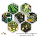 Agri-Impact Consult logo