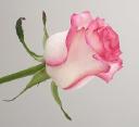 Alpha Sales logo