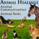 Animal Healings logo