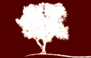 Apricot Tree Management Consulting logo
