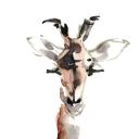 Art Safari Ltd logo