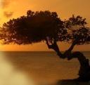 Aruba-Sunsets.com logo