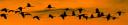 avesdeportugal.info logo