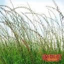 Bamert Seed Company logo