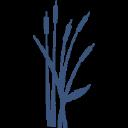 Bay Radiology LLC logo