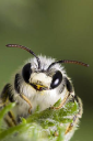 BEE - Send cold emails to BEE