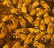 Beebe's Termite, Pest & Bee Service LLC logo