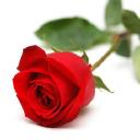 Be Irresistible logo icon