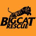 bigcatrescue.org logo icon