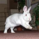 Binky Bunny logo icon