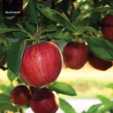 Read Blackmoor Fruit Nursery Reviews