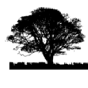 Black Tree IT Ltd. logo
