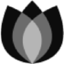 Black Tulip Recruitment logo
