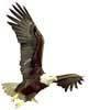 Blue Mountain Eagle Inc logo