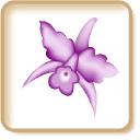 BodaCostarricense.com logo