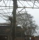 BomenKopen Opheusden logo