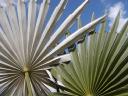 Botanics Wholesale Inc logo