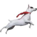 Colorado Canine Orthopedics logo