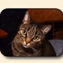 Cat Food logo icon