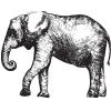 Chez Jay's Restaurant logo icon