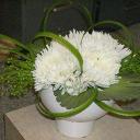 Classic Florals Inc logo