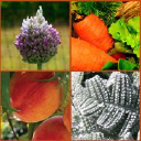 Gardener logo icon