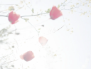 corine zijerveld fotografie logo