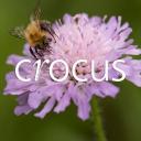 Crocus Ltd logo