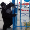 Cuevas Auto Sales
