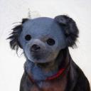 Cwi logo icon