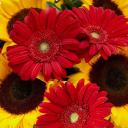 Daylily Floral logo