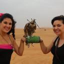 Desert Safari Tours logo icon