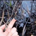 De Smog logo icon