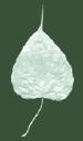 Dharma Seed logo icon