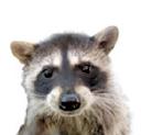 Wild Care logo icon