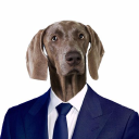 Dog Ceo logo icon