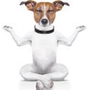 Dog Harmony logo icon