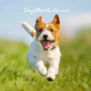 Dogs Best Life logo icon