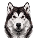Doogweb logo icon