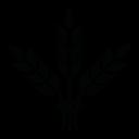 Dorchester Capital logo icon