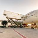 Emirates Flight Catering logo icon