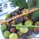 ExperienceClovis.com Online Community Magazine logo