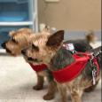 4 Pets' Sake Logo