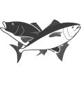 Galveston Party Boats Inc logo icon