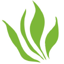 The Carbon Institute logo icon