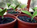 Green Leaf Tree Care Inc. logo